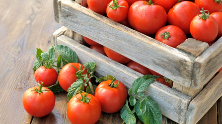 רוטב עגבניות 22% בריקס מרוכז 260 גר'